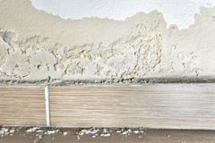 the damage rising damp causes