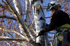 tree pruning costs