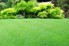 turf installation costs